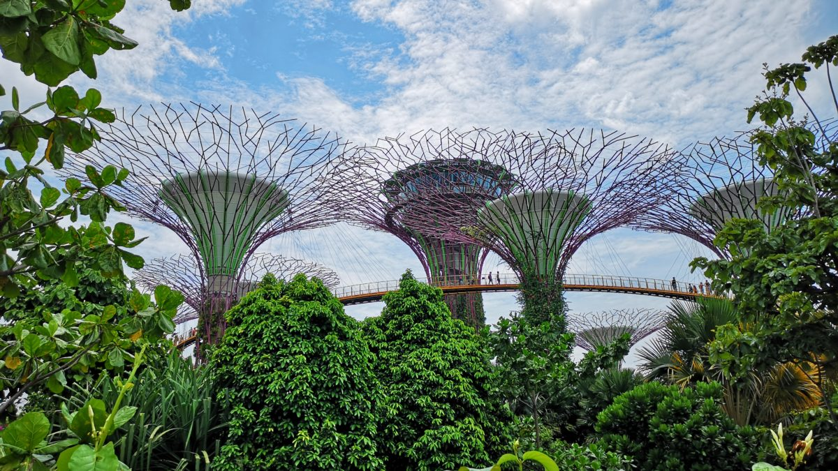 Top 5 Parks in Singapore for Nature Lovers